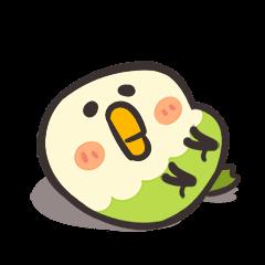 小鸚鵡Bebe