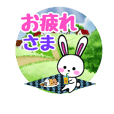 dairy life sticker of the rabbit.