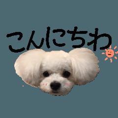Ru-chan's stamp