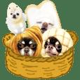 Chihuahua clan