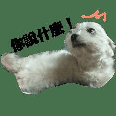Qian_20181119151254