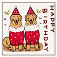 Every Day Dog Golden Retriever3