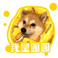 Hung's Dog