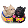 FrenchbulldogLoveFamily_20181123