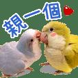 鸚鵡兒賣萌日記