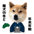 shiba inu winter & New Year's Holiday