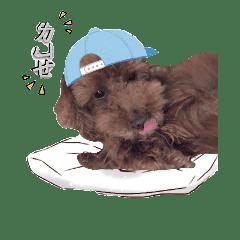 dai21_2018dog