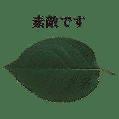 葉っぱ と 敬語