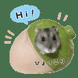Hamster Chibi 4