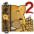 Yo-Hu Exotic Shorthair Cat Part2