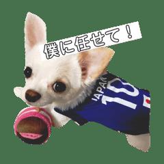 愛犬しゅぷのスタンプ2