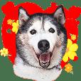 Silly happy dog