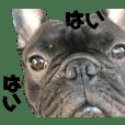 フレブルテンくん(フレンチブルドッグ)
