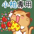 """Niu Niu Cat-""""XIAO BO"""""""