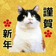 かわいい猫の明るい年末年始♪
