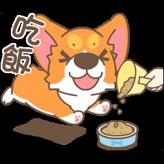 柯基犬椪椪懂吃懂吃!