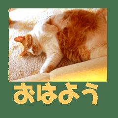 佐藤家の猫2.1