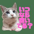 誰かと会う為の猫スタンプ