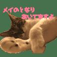 may_cat_2017-2018