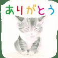 MoeNagata -cat-