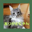 わがやの保護猫と犬スタンプ2