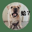我是QQ你是誰?