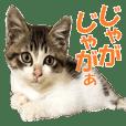 すずくんのキュートなスタンプ★都城弁編
