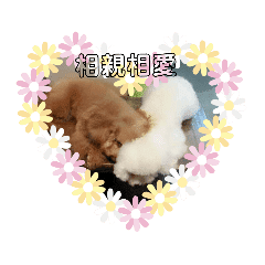 Mie_20181219205115