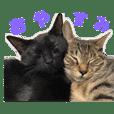 黒とキジトラ(枇杷と桜)