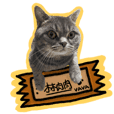 VAVA Cat everyday life 1