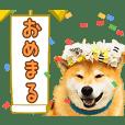 柴犬まるアニメーションスタンプ