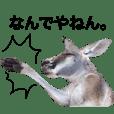 関西弁カンガルー