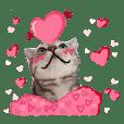 ฟูจิ : แมวน่ารัก