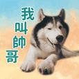 I am a handsome dog