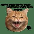 chikuwan_20190103220916