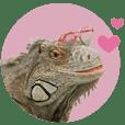 Green Iguana's Gala moving Sticker