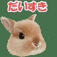 The heart of rabbit's