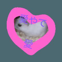momopyon_20190108040703