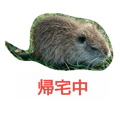 makoto_20190105195635