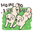 Every Day Dog Labrador Retriever