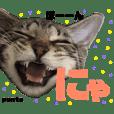 キジトラ猫のponta 〜便利スタンプ〜