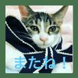 美少女猫の日常挨拶スタンプ