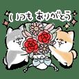 Shiba Inu Dog <caring and love>