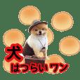 犬はつらいワン☆ポメ☆先輩☆たまのお友達