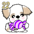 Shih Tzu dog (Give a candy ball) vol.22