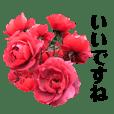 yasuおばさんの薔薇の気持ち2
