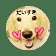 愛犬★茶々くん.1