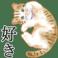 Cat : otonano-zukan