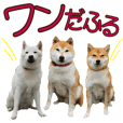 ZOO Animal production SHIBA brothers