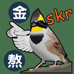 臺灣常見鳥類